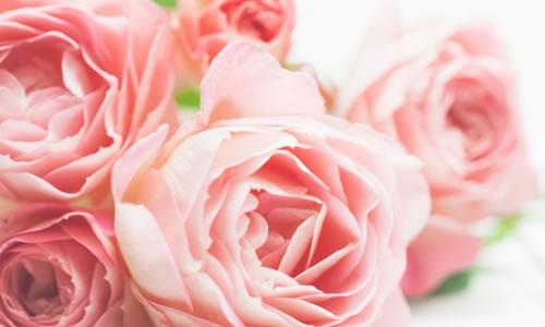 リボンで作るバラの作り方(3種類)!簡単にできる糸なしの方法はコレ