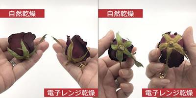 ドライフラワー「バラを2種類の作り方(シリカゲル)で比較」1